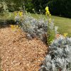 Wooding Chippings In The Garden